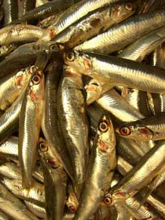 image showing Whitebait - great for a starter, delicious enough to eat as a main course